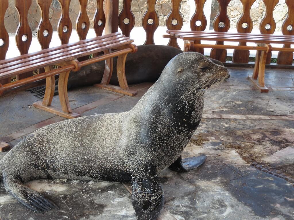 サン・クリストバル島はアシカにキュンキュンしちゃう♪