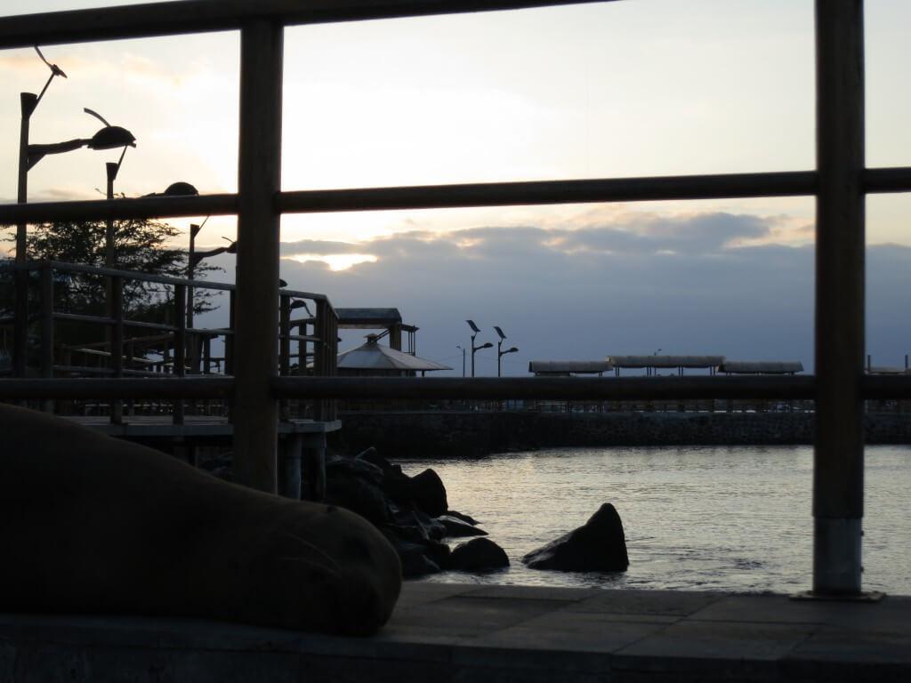 サン・クリストバル島の1日の終わりの時間。それはアシカとともにやってくる・・・。