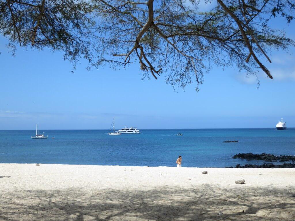 ガラパゴス諸島サン・クリストバル島でシュノーケリング!ポイントは「溺れるな!?」