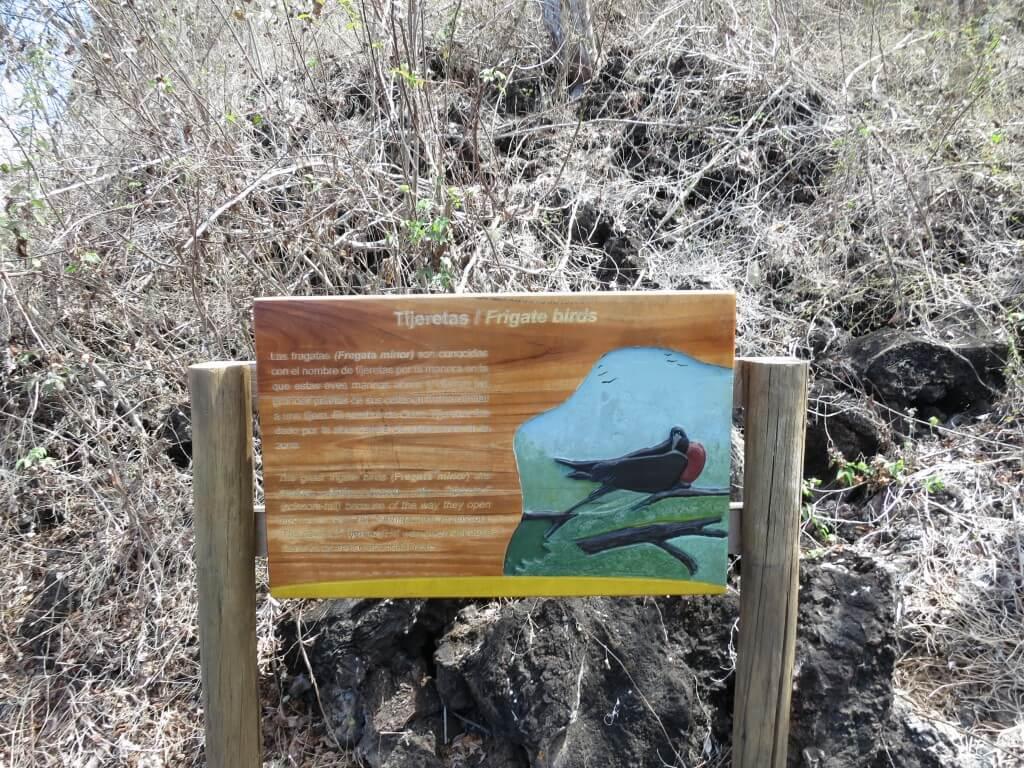 ガラパゴスアメリカグンカンドリ サン・クリストバル島 ガラパゴス諸島