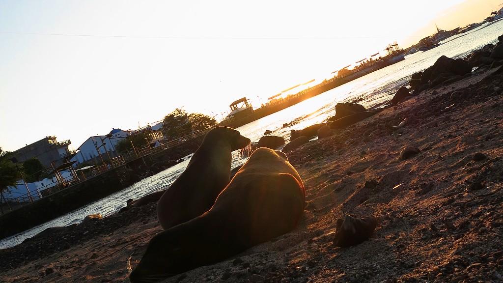 ガラパゴス諸島の行き方!初めて旅行にいくバックパッカーにツアーなど観光情報まとめ