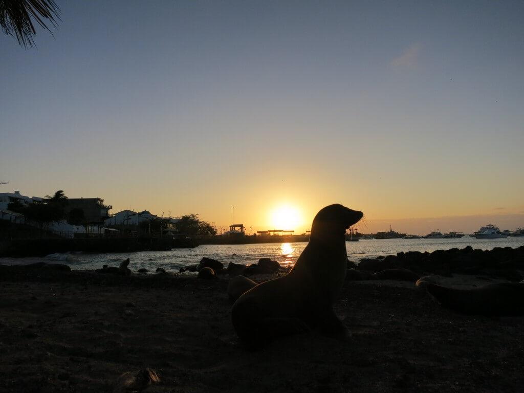サンセット アシカ サン・クリストバル島 ガラパゴス諸島