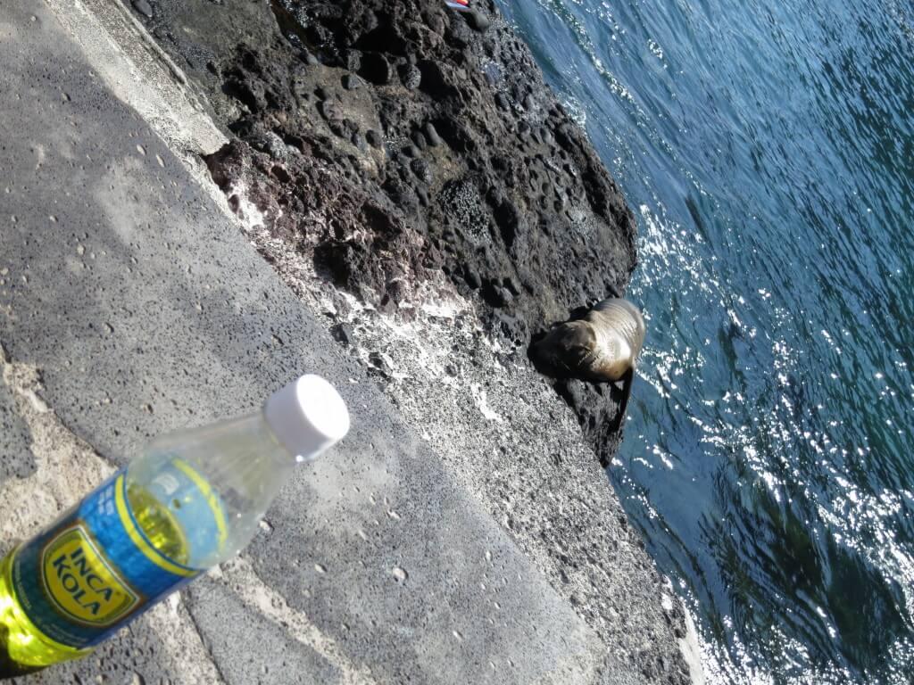 今日のコーラ インカコーラとガラパゴス諸島のアシカ