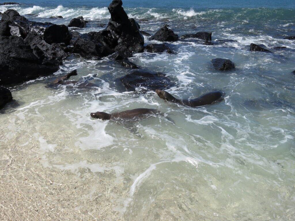 サン・クリストバス島シュノーケリングポイント Playa punta Carola