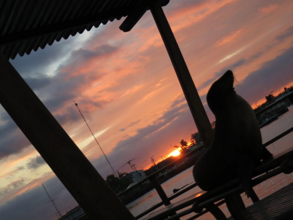 ガラパゴス諸島 夕日 サンセット