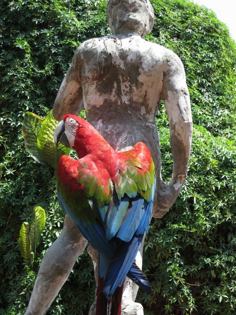 オウム Hotel Espana(ホテル エスパーニャ) リマ 美術館 動物園 彫刻 絵画 ペルー