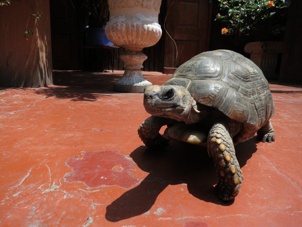 ゾウガメ Hotel Espana(ホテル エスパーニャ) リマ 美術館 動物園 彫刻 絵画 ペルー