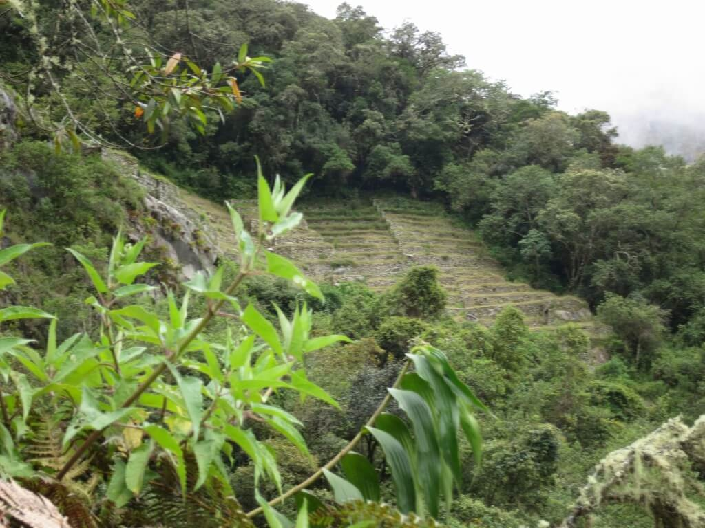 マチュピチュ村からマチュピチュ遺跡までのトレッキングは地獄だった!!