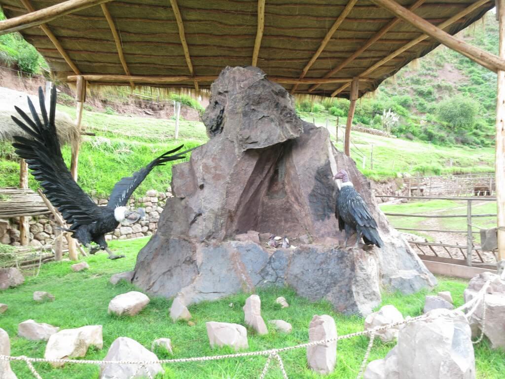 Awana Kancha(アルパカ牧場)に到着!アルパカはどこだ!?