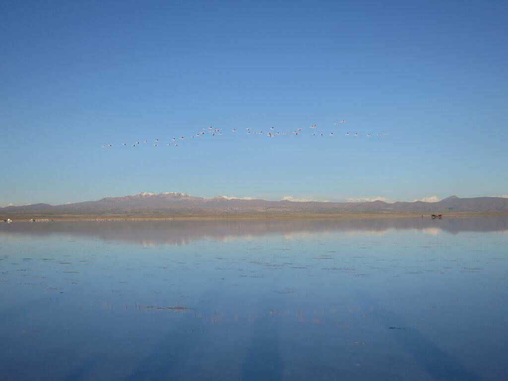 ウユニ塩湖 フラミンゴの群れ