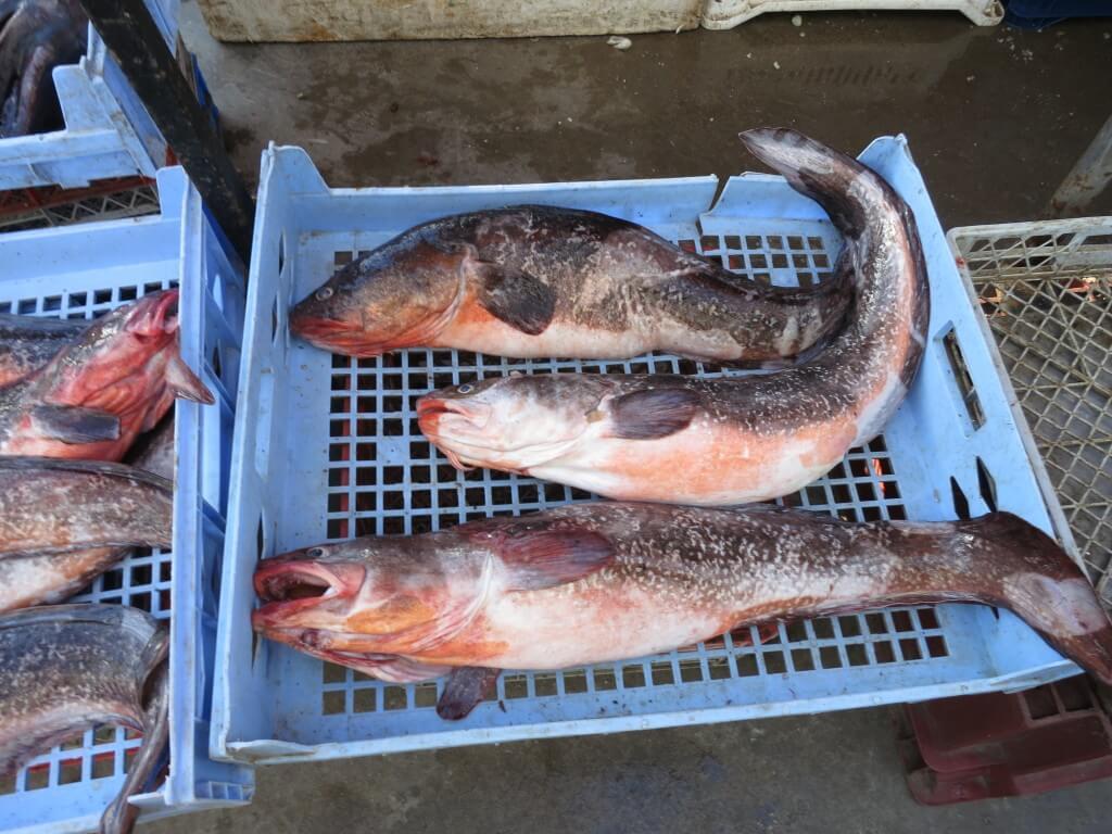 ビーニャ・デル・マル 魚市場 チリ 魚介類