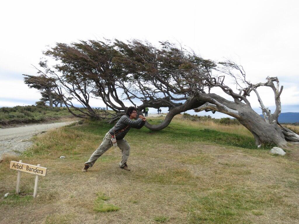 台風中継 Arbol Bandera(アルボール バンデラ) PIRA TOUR ビーグル水道ツアー ペンギン ウシュアイア パタゴニア