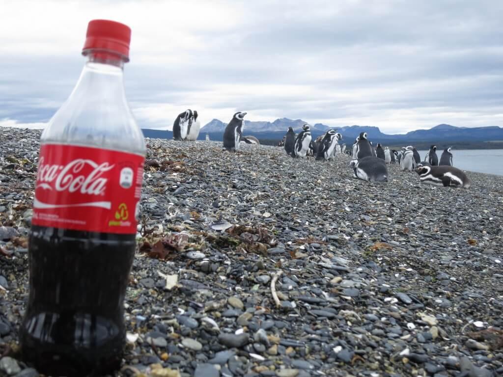 今日のコーラ PIRATOURのペンギン島ツアー