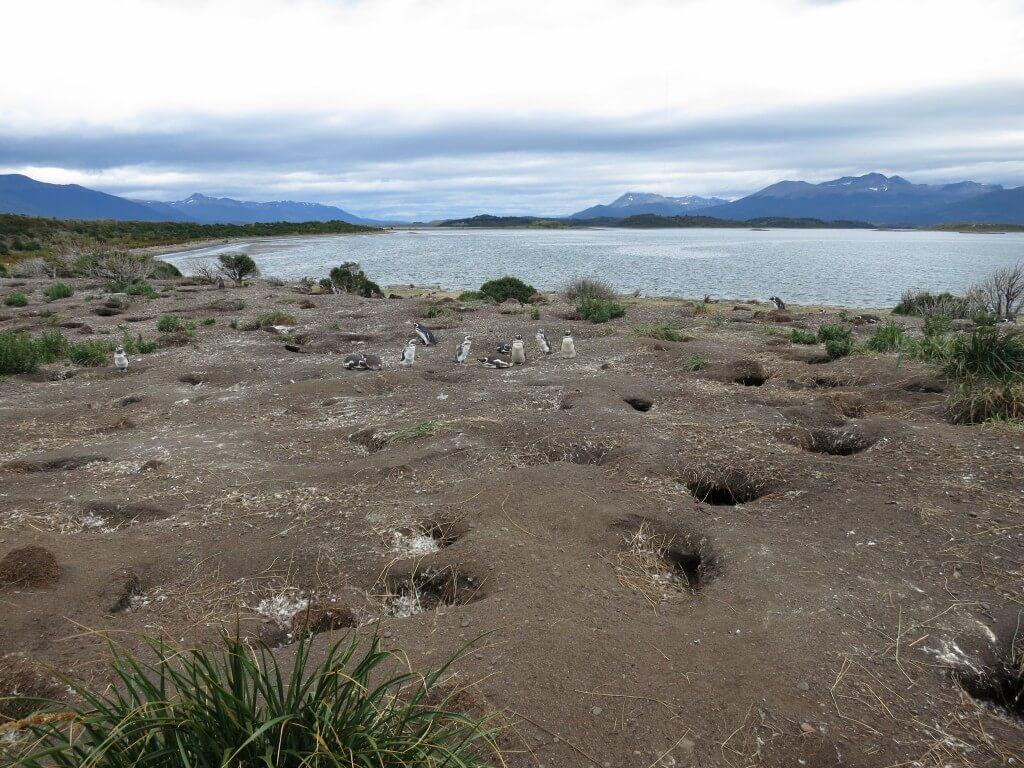 ウシュアイアはビーグル水道ツアーのペンギン島上陸するべし!