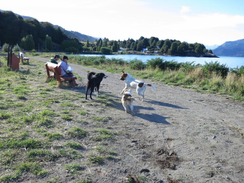 トランキーロ 湖 犬
