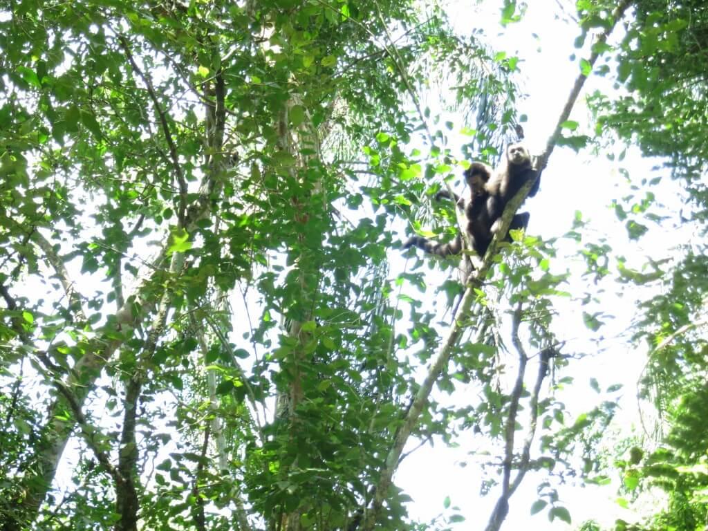 イグアスの滝 国立公園 サル