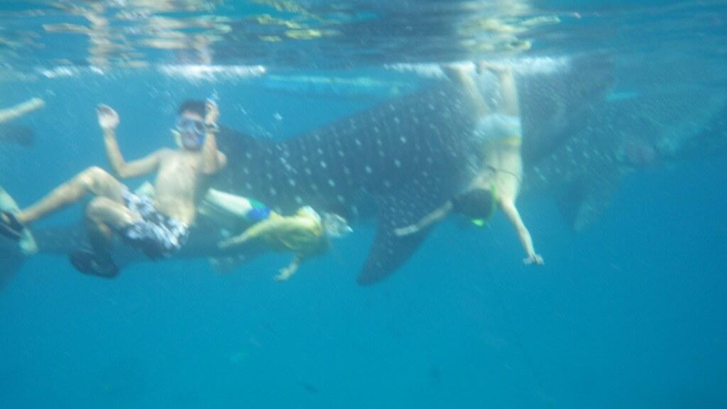 オスロブ ジンベイザメ シュノーケリング 水中カメラ