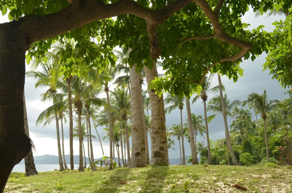無人島でのんびりタイムとシュノーケリングも悲しくなった