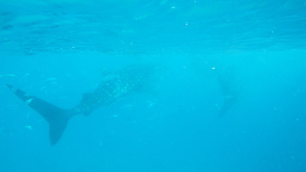 マクタン島以外で「セブ島のおすすめダイビングスポット」は?