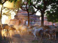 バガン遺跡のサンセット(夕日)をシュエサンドーパゴダで観光する注意点は?