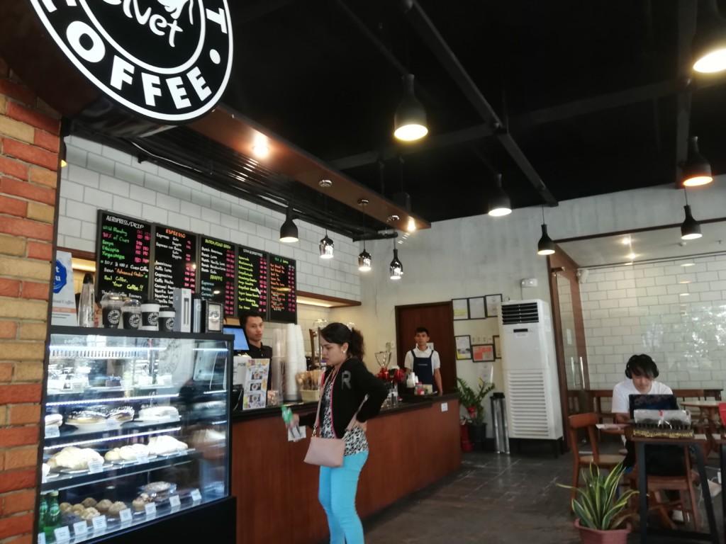幻のコーヒーのシベットコーヒー(CIVET COFFEE)