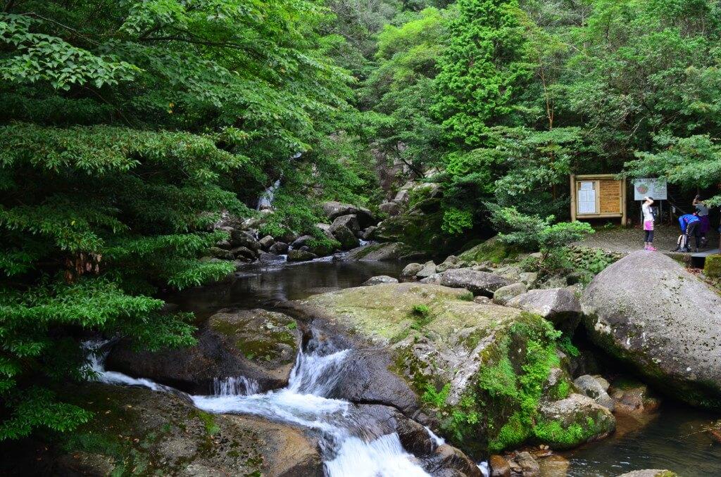 屋久島の白谷雲水峡トレッキングの内容で弥生杉から太鼓岩コースは大自然と苔(こけ)の美しさのもののけ姫の世界