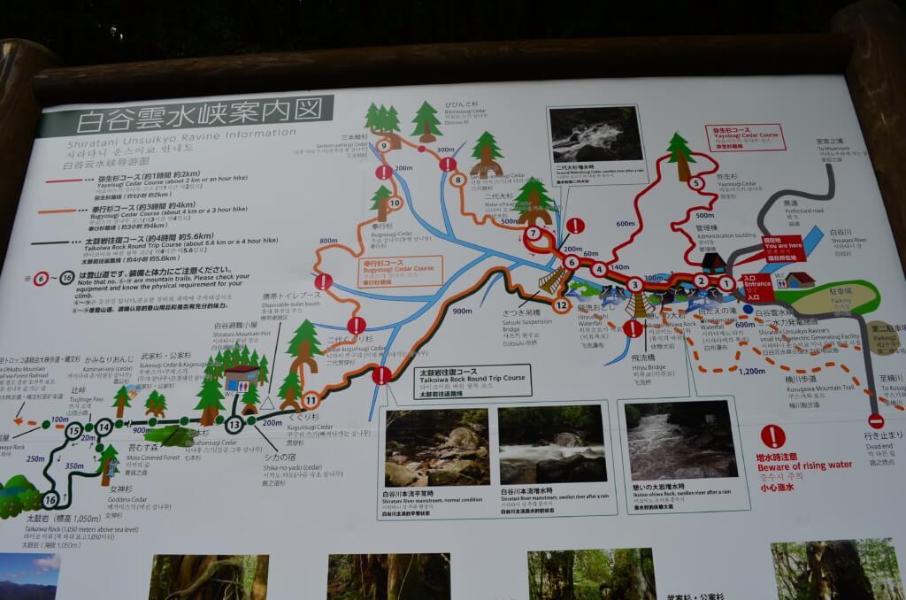 屋久島の白谷雲水峡のトレッキングコースは弥生杉・奉行杉・太鼓岩往復コースの3つ