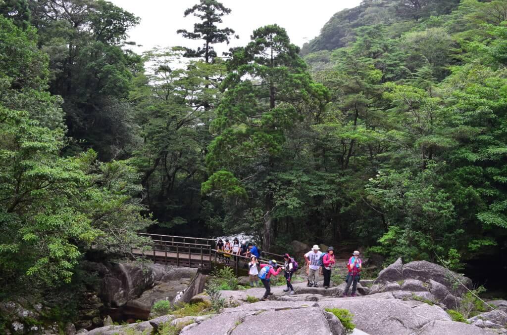 屋久島の白谷雲水峡・弥生杉コースは比較的年配の方でも安心して登れるコース