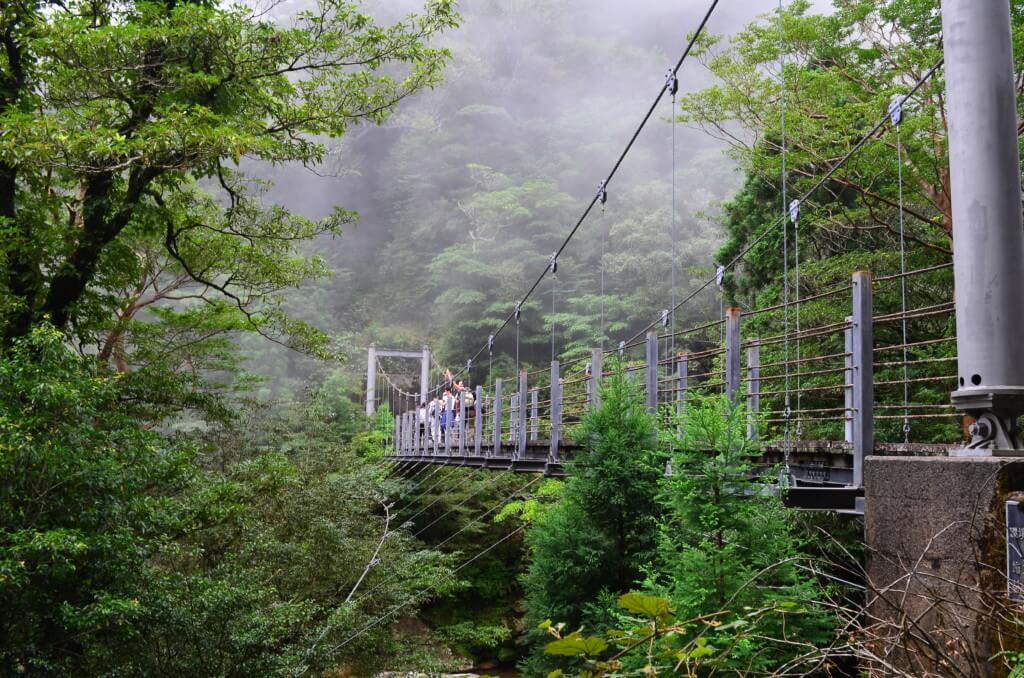 屋久島の白谷雲水峡・太鼓岩コースはもののけ姫の世界が味わえます