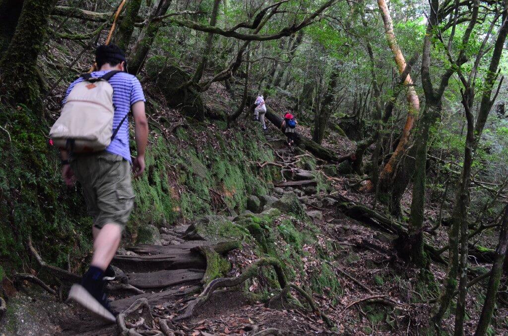 白谷雲水峡トレッキングは本格派山装備が必要?ラフな格好で行けるのか?