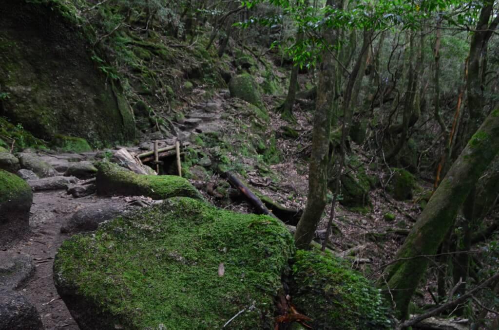 白谷雲水峡・太鼓岩コースは大自然!緑の苔(こけ)と木々が作り出す神秘の世界!