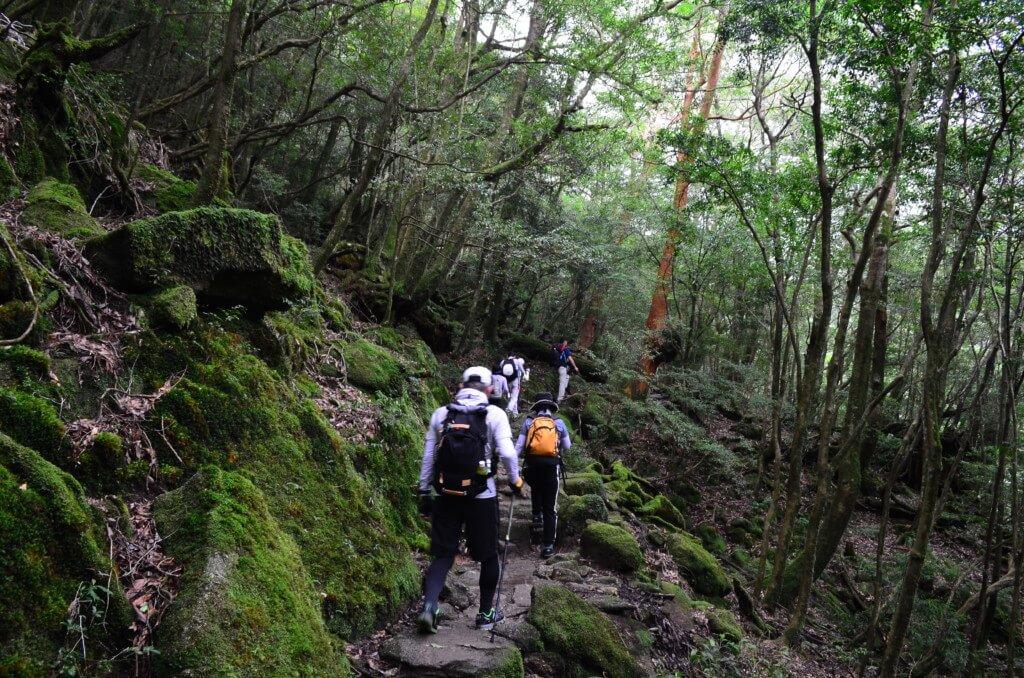 白谷雲水峡トレッキングの恰好は本格派山装備かラフな格好か