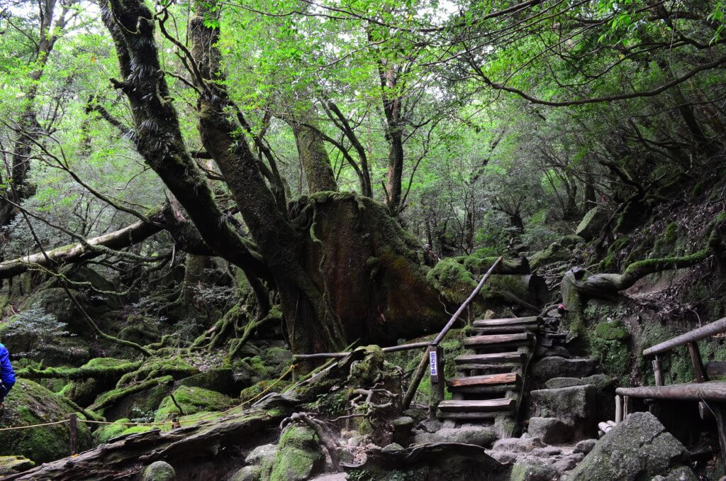 屋久島の白谷雲水峡トレッキング中は自然の湧き水がいっぱいあるから飲み水は安心です