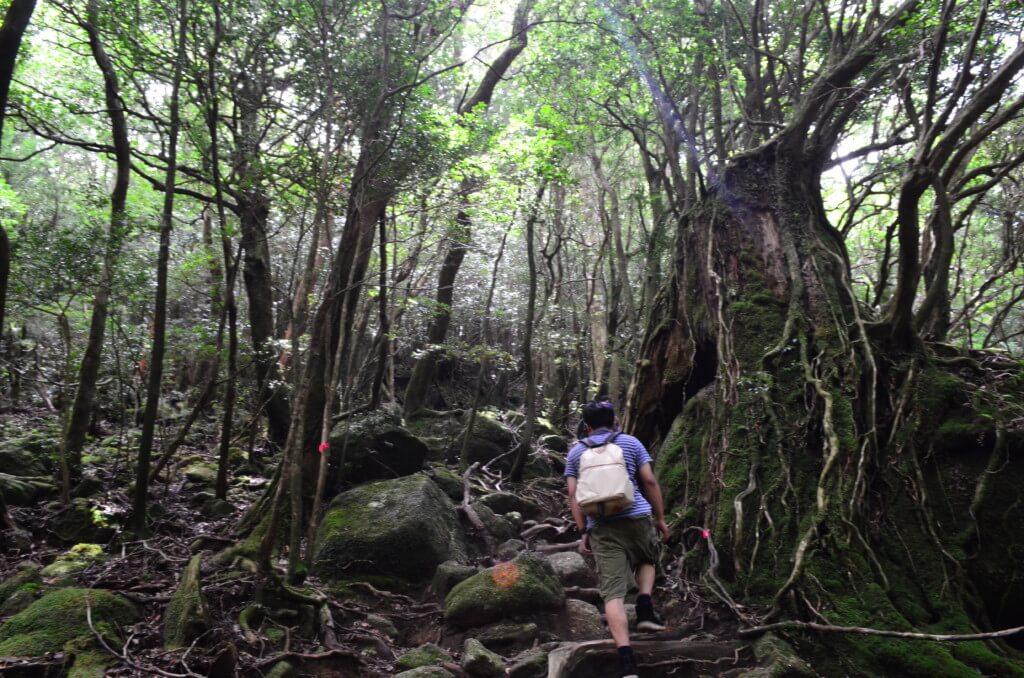 要注意!屋久島の白谷雲水峡トレッキングで太鼓岩コース最後の難所の辻峠は急な山道になる