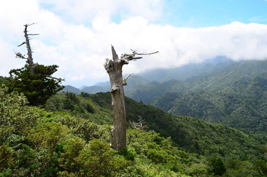 白谷雲水峡 太鼓岩コース もののけ姫 太鼓岩 絶景