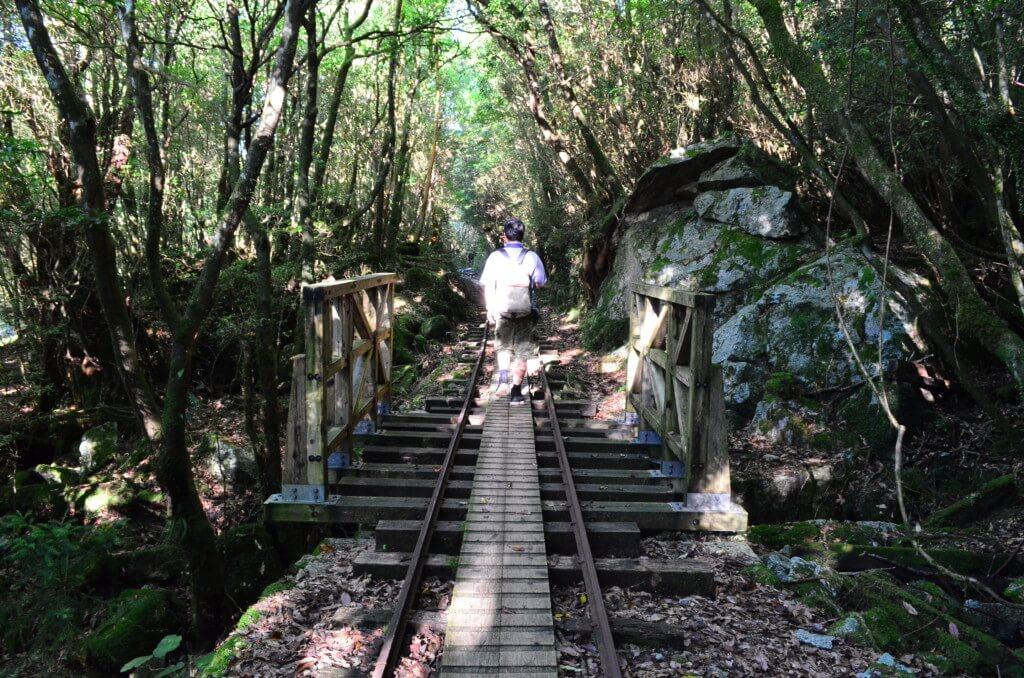 屋久島の縄文杉トレッキングはトロッコ道が終わると本格的な登山道