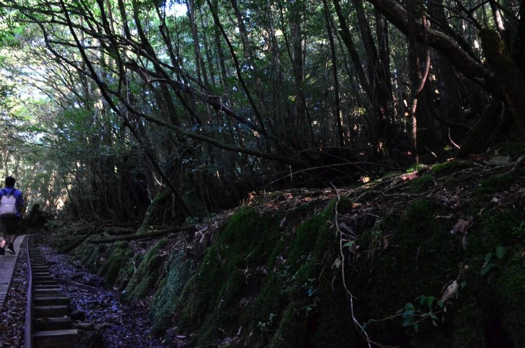 まとめ 屋久島のトレッキングはハードで膝に負担がかかるので無理はしないペースで行きましょう