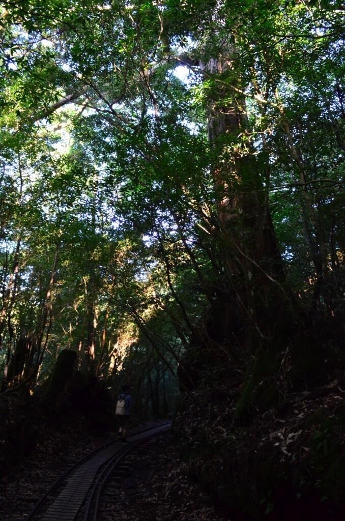 屋久島 縄文杉トレッキング トロッコ道 橋