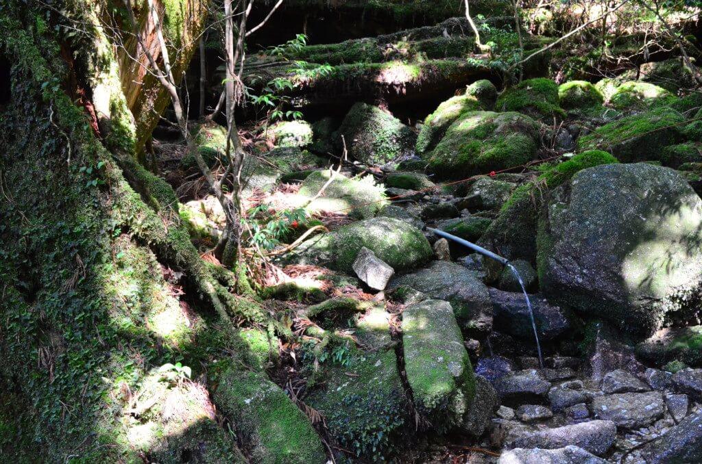 屋久島の縄文杉トレッキング中も湧き水が飲めるけど虻(アブ)もいるから気をつけて