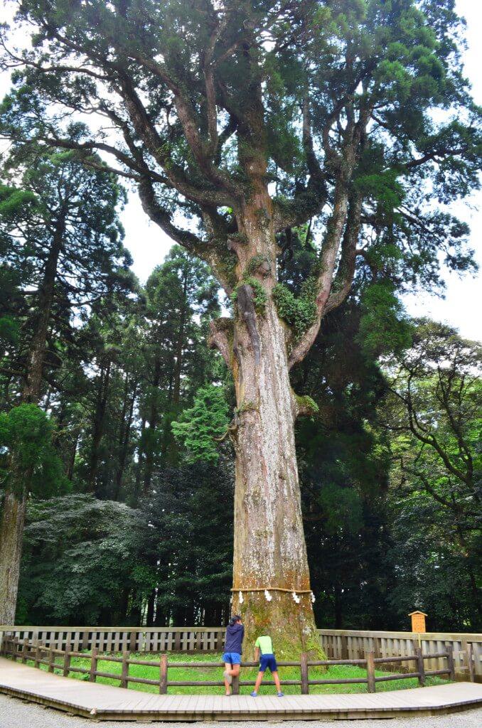 龍馬が実家へ宛てた手紙に登場する「樹齢800年のご神木」は健在!