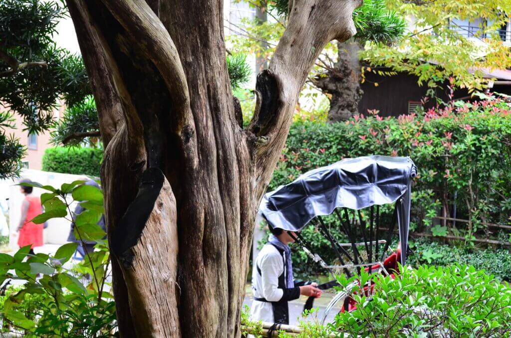 鎌倉観光!まずは遠い報国寺から!竹林を見ながらお茶を頂く!