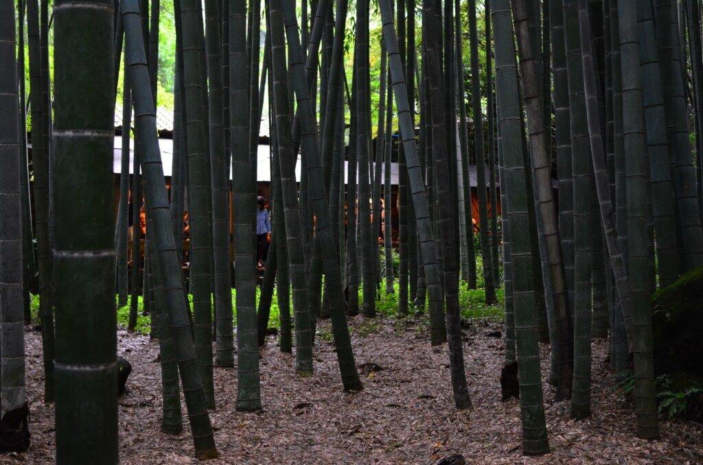 鎌倉観光で報国寺はデートスポットで有名!竹林デートはいかが?