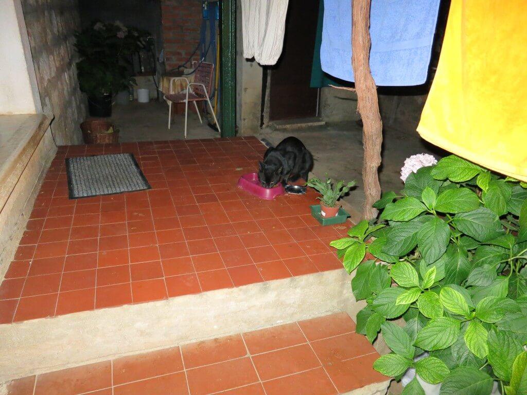 ドブロブニク 黒猫 ジジ 魔女の宅急便 クロアチア