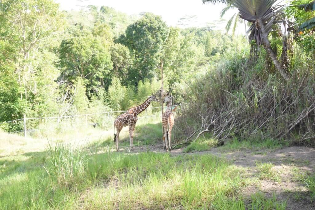 動物園(FAUNA)エリアは鳥やチーター、トラ、ワニなどがいる